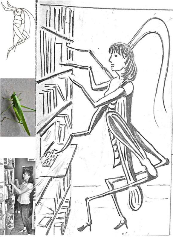 libraire:sauterelle 1
