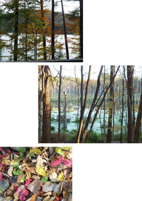 couleurs d'automne usa