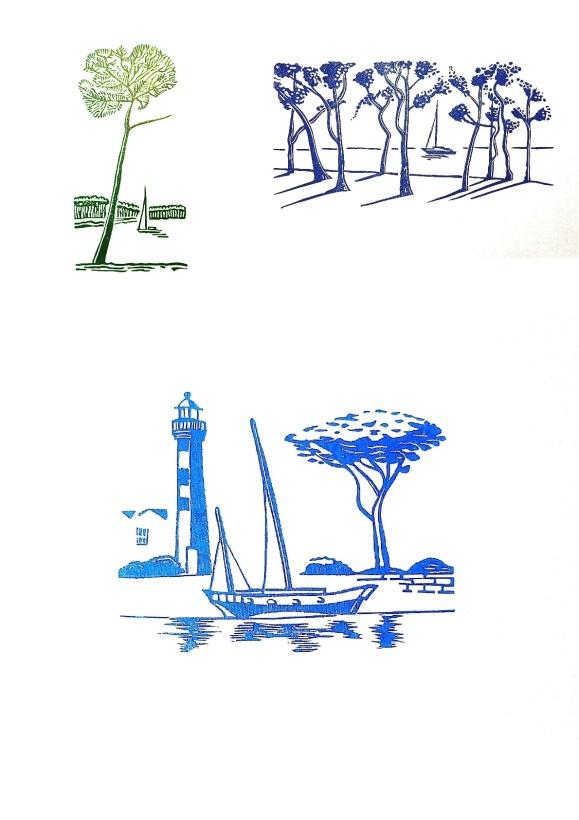 les pins de bord de mer